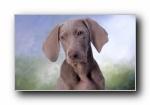 小狗宽屏壁纸
