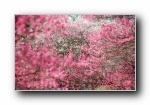 日本自然风光壁纸