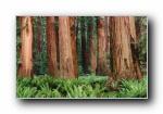 苹果2009最新系统 Snow Leopard 雪豹 全套官方宽屏壁纸 2560*1600