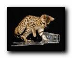 Webshots 2010年二月精美风光动物摄影壁纸