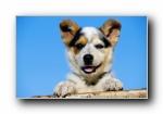 世界名狗宽屏高清壁纸