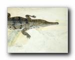 高清精美动物生物壁纸(一) 1600x1200