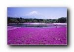 日本风光风景摄影Bing主题宽屏壁纸