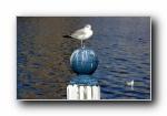 经典精美风光风景动物生物摄影高清宽屏壁纸(十八)
