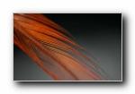 Ubuntu(乌班图) 10.10全新壁纸