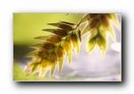 高清树叶绿叶微距摄影宽屏壁纸