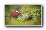 高清精美植物摄影单反朦胧宽屏壁纸 1920x1080p