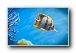 金色热带鱼(多分辨率)