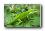 爬行类动物(蛇,蜥蜴,龟,鳄鱼)