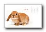 2011年兔年日历月历年历宽屏壁纸