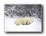 Webshots 2010年十二月精美风光动物摄影壁纸