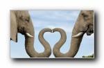 Webshots 2011年二月精美风光动物摄影宽屏壁纸