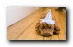Webshots 2011年三月精美风光动物摄影宽屏壁纸