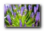 高清摄影风光风景植物宽屏壁纸 2560x1600