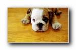 Webshots 2011年四月精美风光动物摄影宽屏壁纸