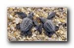 Webshots 2011年五月精美风光动物摄影宽屏壁纸