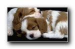 Webshots 2011年六月精美风光动物摄影宽屏壁纸