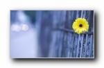 Webshots 2011年八月精美风光动物摄影宽屏壁纸