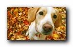 Webshots 2011年九月精美风光动物摄影宽屏壁纸