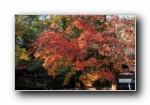 日本京都下鸭神社的红叶宽屏壁纸