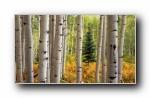 Webshots 2011年十月精美风光动物摄影宽屏壁纸
