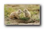 Webshots 2011年十一月精美风光动物摄影宽屏壁纸