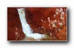Webshots 2012年一月精美风光动物摄影宽屏壁纸
