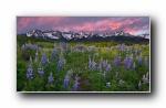 Webshots 2012年三月精美风光动物摄影宽屏壁纸