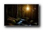 森林(Forests) 微软官方Win7主题宽屏壁纸