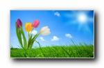 Webshots 2012年四月精美风光动物摄影宽屏壁纸