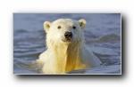 Webshots 2012年五月精美风光动物摄影宽屏壁纸
