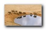 Webshots 2012年六月精美风光动物摄影宽屏壁纸