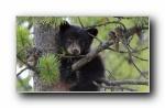 Webshots 2012年九月精美风光动物摄影宽屏壁纸