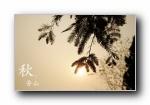 北京香山�o宜�@秋之�t�~ �z影��屏壁�
