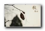 北京香山静宜园秋之红叶 摄影宽屏壁纸
