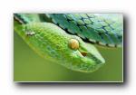 《蛇》高清宽屏壁纸