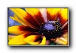 秘密花园第二辑:花,昆虫 摄影宽屏壁纸