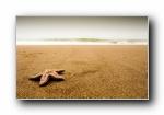 海星 starfish