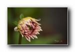 《花园一瞥》鲜花绿草昆虫 宽屏壁纸
