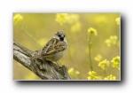 春季之美:鸟语花香宽屏壁纸
