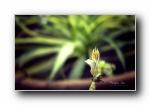 《花园一瞥》第二辑 鲜花绿草昆虫 宽屏壁纸