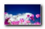 春天的小野花 宽屏壁纸