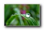 绿叶上的雨滴,露珠,水滴,水珠宽屏壁纸