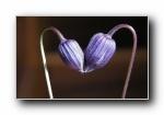 花之情侣 爱情温馨浪漫宽屏壁纸