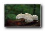 森林中的蘑菇 宽屏壁纸