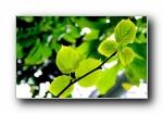 香港公园 绿色植物摄影宽屏壁纸