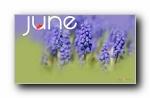 2013年6月(六月)月历原图宽屏壁纸