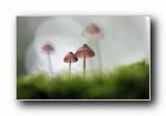 小蘑菇 绿色植物宽屏壁纸