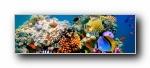 热带鱼 海底世界 超宽双屏宽屏壁纸