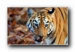 印度原始野生动物宽屏壁纸